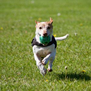 Go for it. Dog bringing back ball